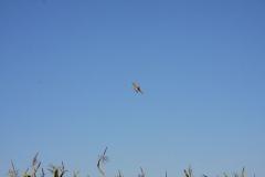 Abfliegen_2011_18